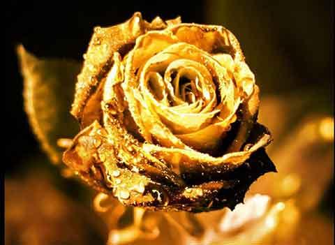 Prière de la Rose d'or » du Pape Innocent III - Site-Catholique.fr
